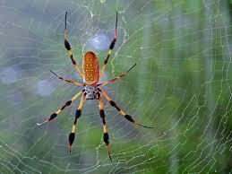 animal spider wallpaper aranhas pinterest spider and animal