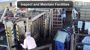 cattle handling facilities basic components youtube