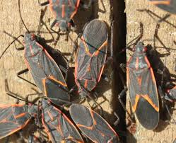 Small Red Bugs On Patio by Fall Pest Control Tips Homeowner Offers