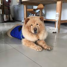manila speak must haves for every furkid gadgets for comfort