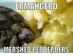 Ermahgerd Animal Memes - ermahgerd mershed perderders ermahgerd meme on me me