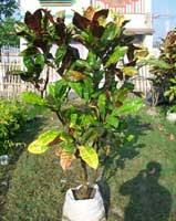 ornamental plant products directory ornamental plant industry market