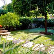 Backyard Shade Trees Photos Hgtv