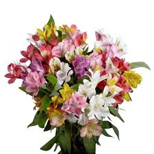 Alstroemeria Globalrose Fresh Alstroemeria Flowers 100 Stems 400 Blooms
