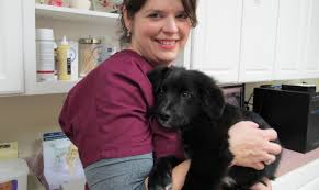 st francis animal hospital veterinarian in columbia pa usa home