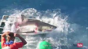 video shark smashes into cage with diver inside abc13 com