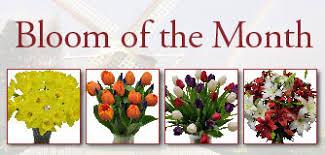 Flowers Of The Month List - fresh cut flowers u0026 spring flowering bulbs tulips com