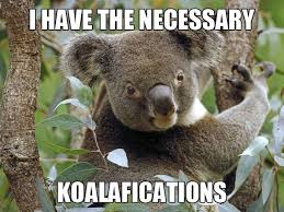 Application Meme - lol meme funny hiring job application qualifications koala