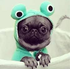 Sad Pug Meme - create meme sad meme sad meme pug life pug pictures
