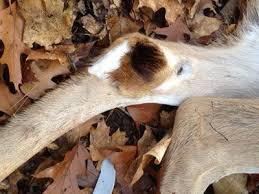 How To Build Hunting Blind Best 25 Deer Hunting Blinds Ideas On Pinterest Bow Hunting Tips