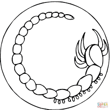 scorpion 4 coloring page free printable coloring pages