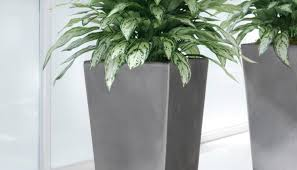 unique indoor planters plant another beautiful container garden idea by unique design l