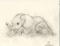 little elephant sketch by amimir on deviantart