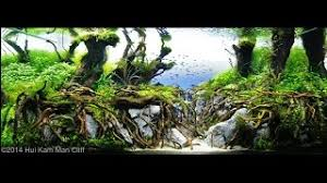 Aquascaping Competition Cheap Aquascaping Rocks For Sale Find Aquascaping Rocks For Sale
