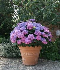 Soil Mix For Container Gardening - container growing