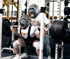 Monkey Bench 5 People You U0027ll See In A Commercial Gym Hypertrophy Haven