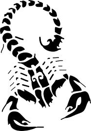 scorpion tribal tattoo design on white background photos