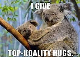 Koala Meme - funny koala meme collection 9 pictures animal space