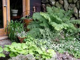 shady modern garden ideas 15 interesting shady garden ideas