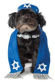 hanukkah hat rubie s yarmulke and tallis dog costume pet supplies