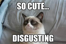 So Cute Meme - so cute disgusting erynn grumpy cat quickmeme
