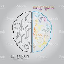 brain anatomy coloring book left brain and right brain cerebral function concept stock vector