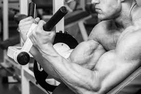 arms workout add an inch to your arms in 21 days junkies