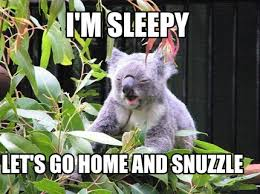Meme Sleepy - meme creator tired koala meme generator at memecreator org