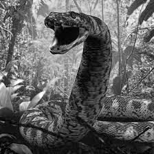 amazon dimana yacu mama siluman ular raksasa jahat penunggu sungai amazon
