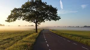 free photo road tree fog foggy country free image on