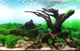 Aquascape Freshwater Aquarium Aquascapes The Art Of Creating Delicate Underwater Gardens Mnn