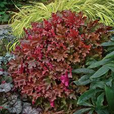 Fragrant Plants For Shade - shade perennial plants u0026 flowers perennials for shade gardens