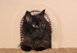 amazon com cat door the original cathole interior pet door
