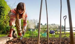 how to keep your vegetable patch weed free and improve the soil