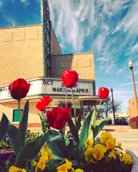 Flowers In Denton - what we did march 6th 2017 u2014 we denton do it