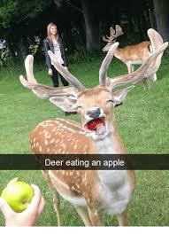 Deer Meme - deer eating an apple deer meme on me me