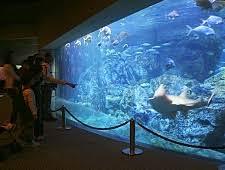 japanese aquarium aquariums in japan