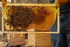 spring bee hive update backyard ecosystem