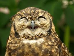 driver pretends to be an owl in a tree on the run for the
