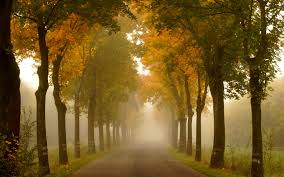 forest morning forest foggy pathway path rows trees forests