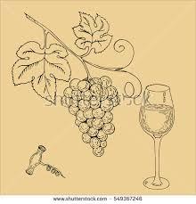 vector hand drawn grape sketch vineyard stock vector 324501287