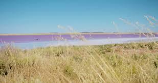 red pink bumbunga lake south australia stock video footage