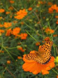 fall butterfly flowers lovetoknow