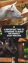 Goat Home Decor Best 25 Goat Fence Ideas On Pinterest Wire Fence Goat Pen And