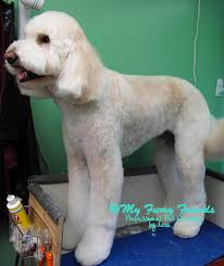 how to cut a goldendoodles hair pet grooming the good the bad the furry grooming doodles