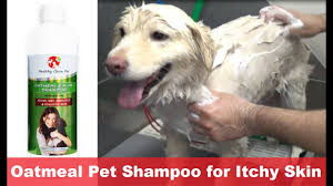 oatmeal dog shampoo for itchy skin by healthy clean pet youtube