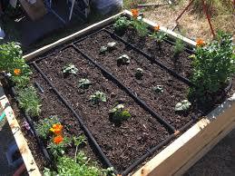 gardening u2013 tinytee healthbits
