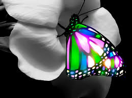 3d butterfly hd quality photos