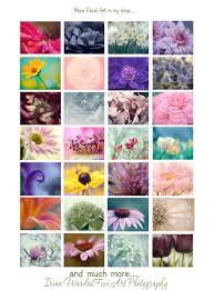 lavender flower photography floral print hyacinth wall decor