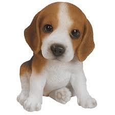beagle puppy garden